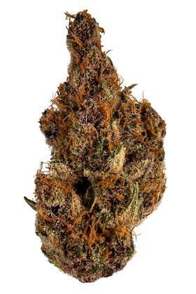 Purple Wookie Strain - Indica Cannabis Video, THC, Terpenes : Hytiva