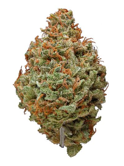 Red Cherry Berry - Hybrid Cannabis Strain