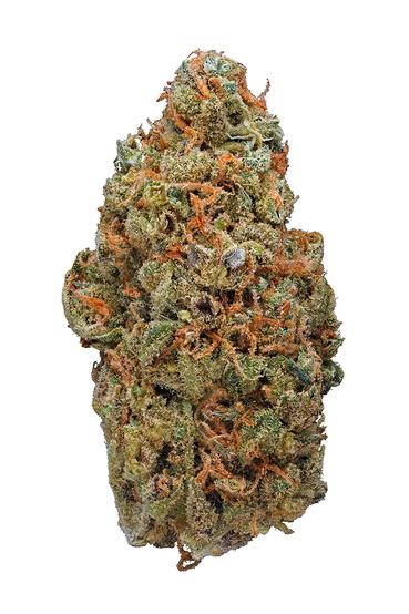 Red Congolese - Sativa Cannabis Strain