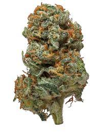 Romulan - Indica Cannabis Strain