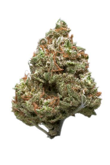 Royal Haze - Hybrid Cannabis Strain