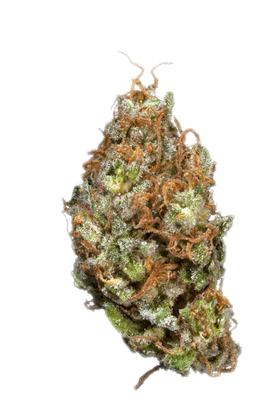 Scurple - Hybrid Cannabis Strain