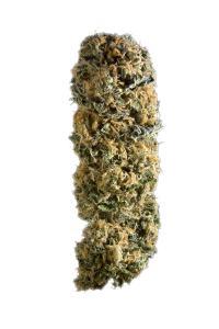 Sensi Star - Indica Cannabis Strain