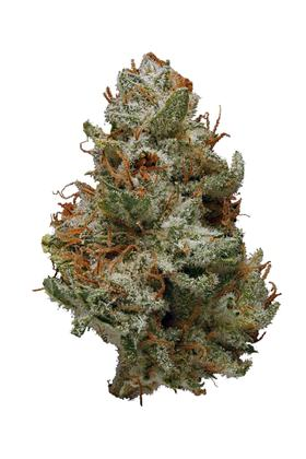 Serious 6 - Sativa Cannabis Strain