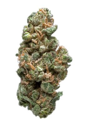 Sharksbreath - Hybrid Cannabis Strain