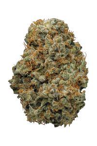 Shiva Skunk - Indica Cannabis Strain