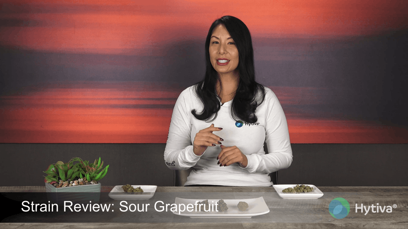 Strain Review: Sour Grapefruit Youtube Video