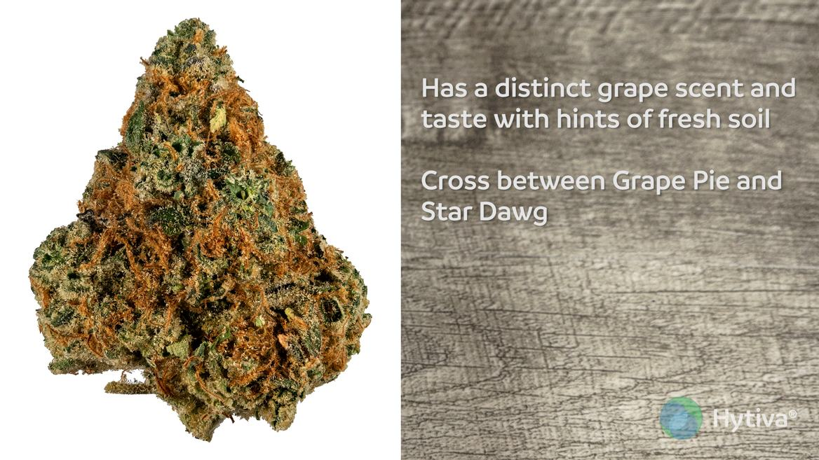Strain review video: Star Pie