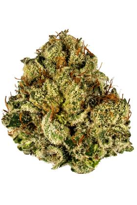 Stoney Point - Hybrid Cannabis Strain