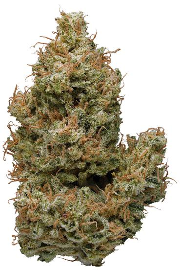 Sunshine - Sativa Cannabis Strain
