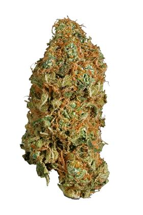 Super Jack - Sativa Cannabis Strain