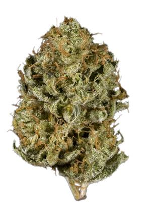 Super Snow Dog - Sativa Cannabis Strain