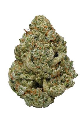 Supernatural - Sativa Cannabis Strain