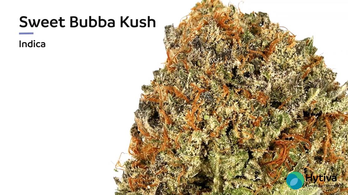 Stamm Bewertungsvideo: Sweet Bubba Kush