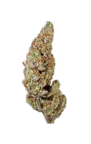 Swiss Cheese - Hybrid Cannabis Strain
