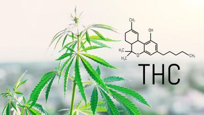 What is Delta 8 THC?