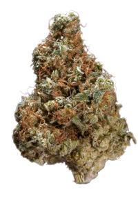 Tahoe Alien - Hybrid Cannabis Strain