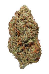 Tahoe OG Kush - Hybrid Cannabis Strain