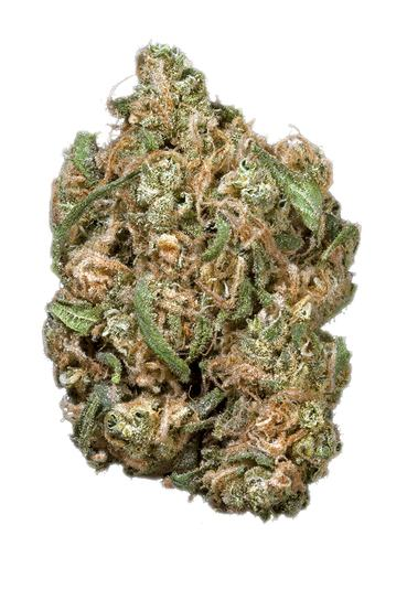 Tangerine Dream - Hybrid Cannabis Strain
