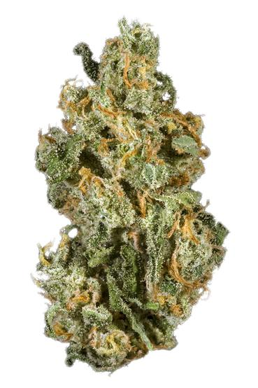 The Doctor - Hybrid Cannabis Strain