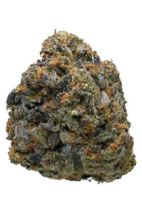 Thin Mint Girl Scout Cookies - Hybride Cannabis Strain