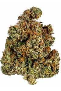 Trainwreck - Sativa Cannabis Strain