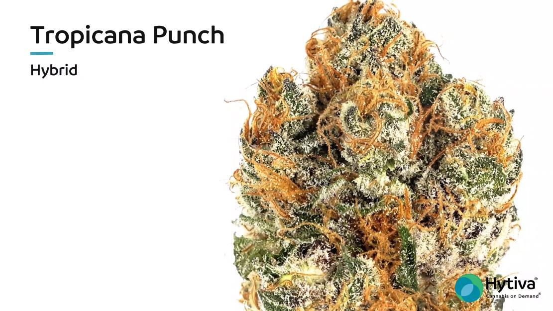 Stamm Bewertungsvideo: Tropicana Punch