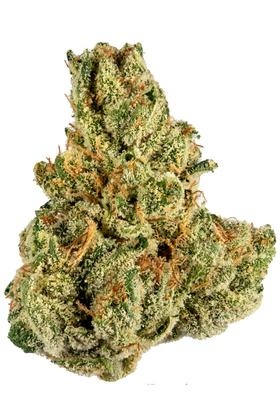 Tropicanna - Sativa Cannabis Strain