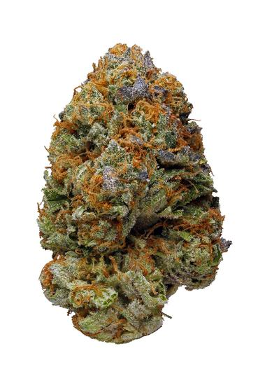 Twisted Citrus - Sativa Cannabis Strain