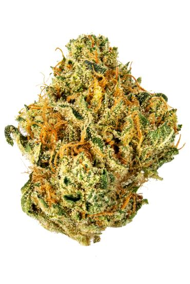 UK Cheese - Hybrid Cannabis Strain