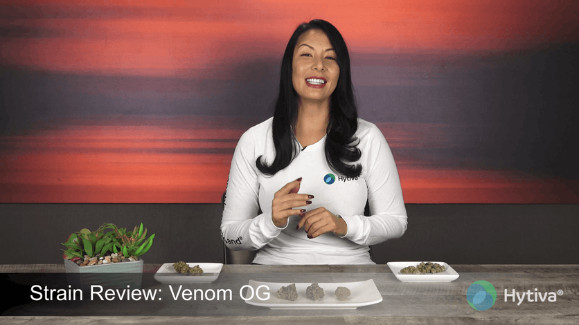 Strain Review: Venom OG Youtube Video