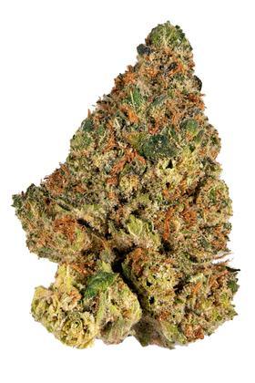 Watermelon Tree Hybrid Cannabis Strain Video Cbd Thc Terps Hytiva