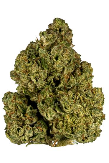 White Angel - Hybrid Cannabis Strain