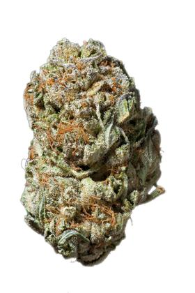 White Cheese - Hybrid Cannabis Strain