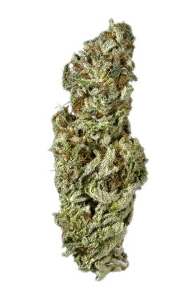 White Queen - Hybrid Cannabis Strain