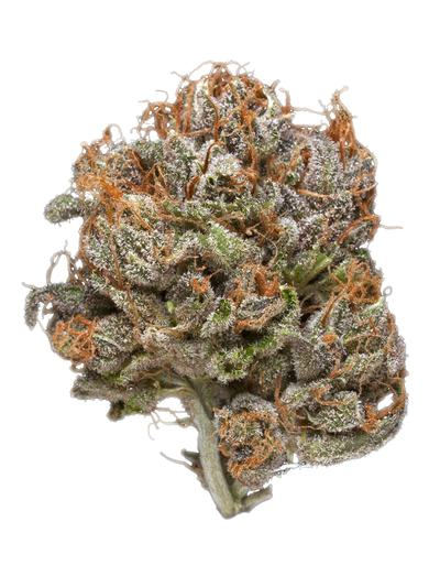 White Slipper - Hybrid Cannabis Strain