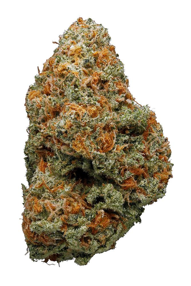 A large nug of the Willie Nelson cannabis strain is displayed against a white background. This is a dense nug with lots of orange hairs and kief. Photo credit to Hytiva.com